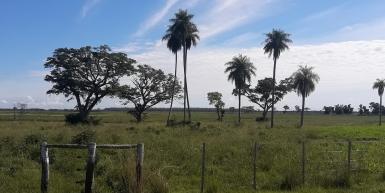 Costa del Rio Paraná en Corrientes, 6800 has.