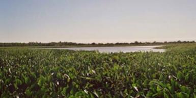 CARABAJAL ISLAND: 2350 HECTARES