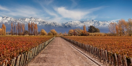 THE SPIRIT OF WINE, MENDOZA